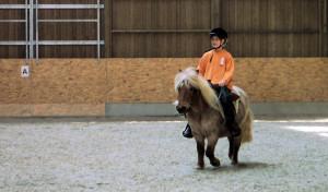 pony_halle